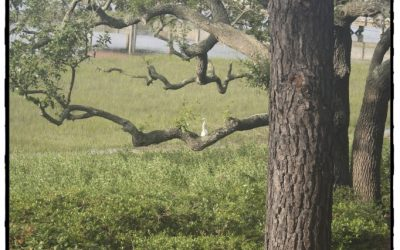 Five Minute Friday – Tree