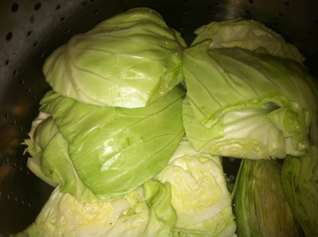 Preparing Cabbage from the Garden